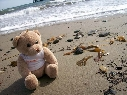 Eddy Bear on the beach, Santa Barbara